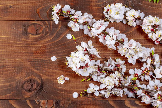 Sprigs of a apricot with flowers on wooden background - Kostenloses image #460489