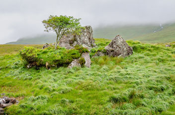 Between a rock and a hard-place within the Delphi Valley, near Leenane, Connemara, Co. Galway, Ireland. - Kostenloses image #460859