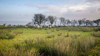 A flock of sheep on Knockagh Hill - Free image #461279