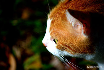Cat by iezalel williams IMG_1642 - Canon EOS 700D - Kostenloses image #462509