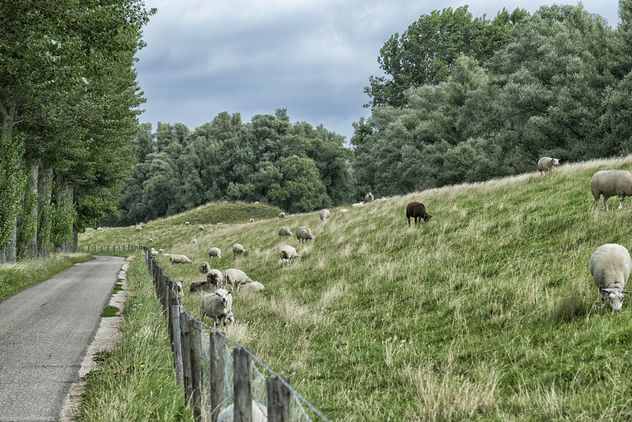 Sheep - image #462919 gratis