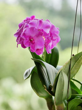 hanging orchid plant - image #463559 gratis