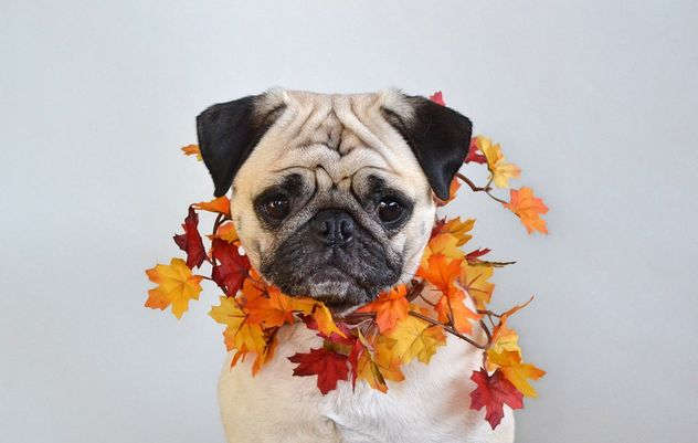 Welcoming Fall - Free image #464079