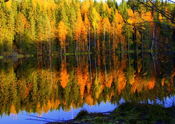 The autumn colors. - image gratuit #464619