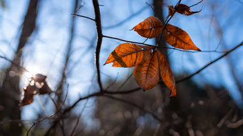 Last Leaves of Autumn - Free image #465909