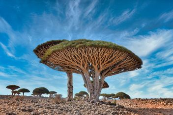 Dragon's Blood Trees - image #466289 gratis