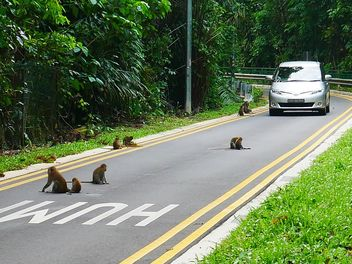 Thomson nature park - monkeys are king here - Kostenloses image #466389