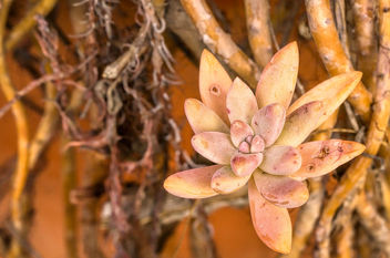 Orange succulent - image #467359 gratis