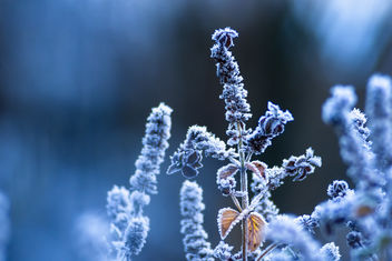 Cold Nature - image #467679 gratis
