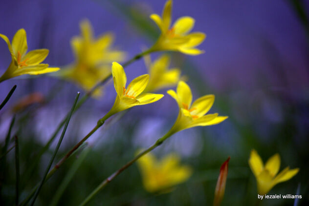 Narcissus - The Truth is OUT with NO FEAR IMG_1934-001 - Free image #468929