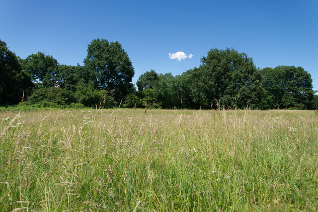 Field. Summer, wide. - Free image #472299